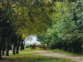 Maple trees and horses a sight synonymous with Kaapsehoop