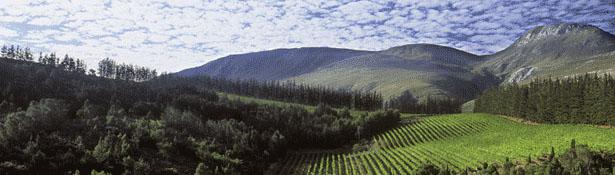 Paul Cluver Wine Estate, Elgin, Overberg