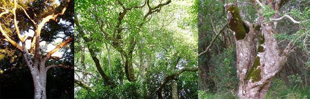 Platbos Forest Gansbaai