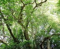 Platbos Forest
