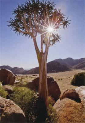 The Richtersveld is incredibly dry, but it manages to sustain a surprising amount of plants