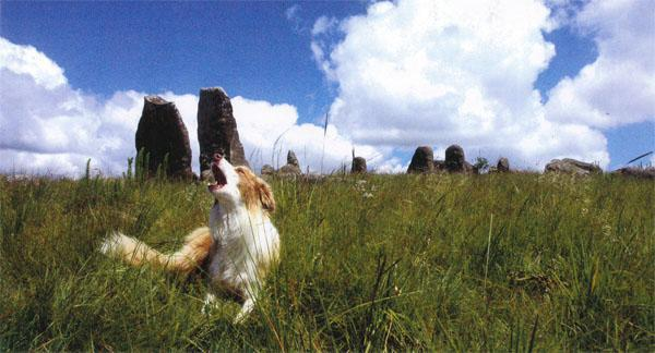 "The fascinating and controversial Adam's Calendar ~ a stone ""calendar"" that is apparently more than 75 000 years old. It is a big tourist attraction. Here, Brollox, Reinette van Niekerk's Australian kelpie, seems to agree that there is something sinister about the place."