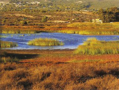 A tiny portion of Verlorenvlei, the vast, bird-rich Ramsar wetland on Elands Bay's doorstep