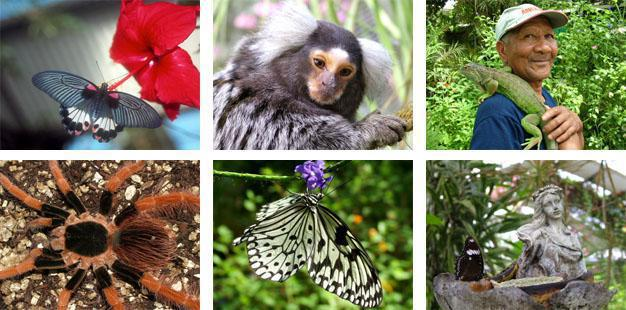Butterfly World Paarl