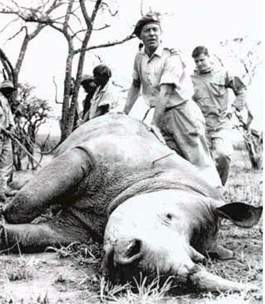 Ian Player developed a special affinity for rhinos as a young man while working with the endangered animals in South Africa's Imfolozi Game Reserve.