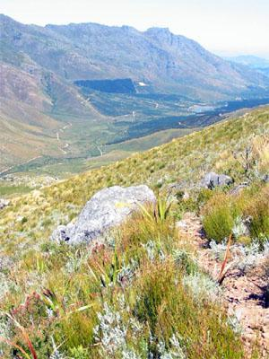 Jonkershoek Nature Reserve Cape Winelands