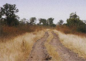 A modest track leads you into Zimbabwe