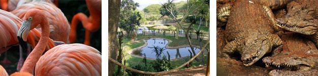 Crocworld, Scottburgh, Kwazulu Natal