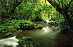 Sabie Forest Area, Mpumalanga, South Africa