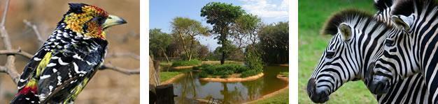Vernon Crookes Nature Reserve KwaZulu Natal