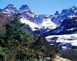 Cathedral Peak State Forest, Drakensberg, KwaZulu-Natal