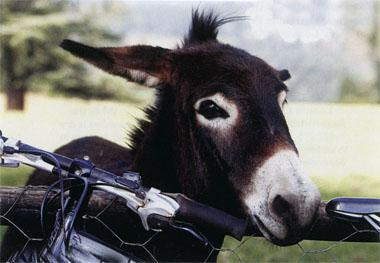 Oops, watch your handlebars, the donkeys love nibbling them.