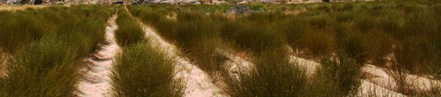 Rooibos Tea Clanwilliam