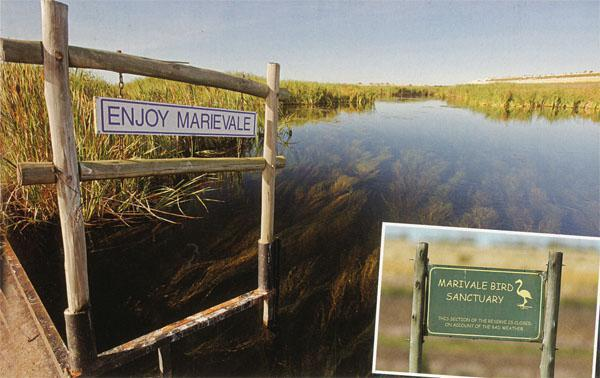 The main causeway is an excellent place to search the reed edges for skulking birds. Marievale signage.
