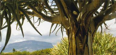 An iconic Kokerboom frames a view of the Matsikamma