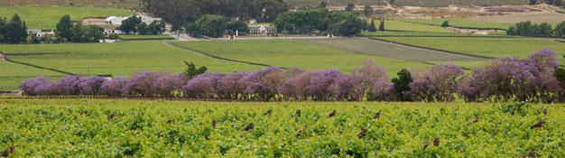 Cape Winelands, Western Cape, South Africa