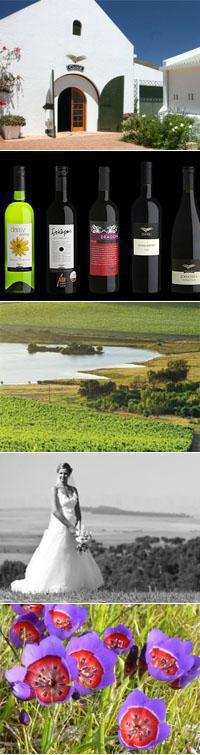 Cloof Wines, Darling, Cape West Coast