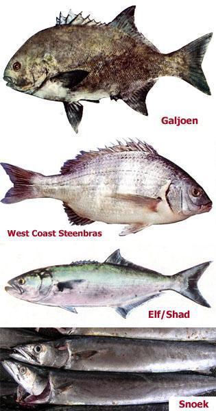 Fish of West Coast