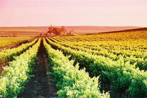 Lutzville Winery, West Coast