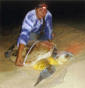 Researcher Jenny Tuck measures a leatherback turtle