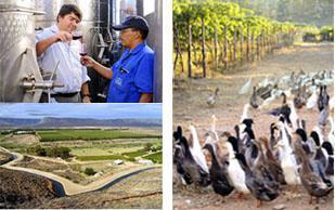 Stellar Organic Winery Trawar Cederberg
