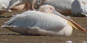 Velddrif Estuary Birds