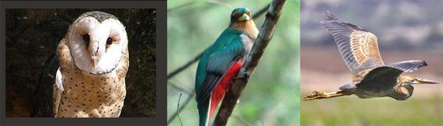 Balgowan Birding, Natal Midlands, Kwazulu Natal