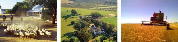 Kersfontein Farm, Hopefield, Western Cape