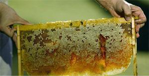 Kersfontein Farm honey, Hopefield
