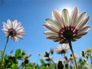 Lutzville Cape West Coast Flowers