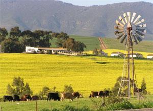 Malmesbury, Swartland, Western Cape