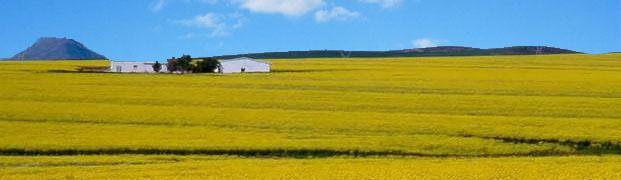 Piketberg, Swartlands, Western Cape