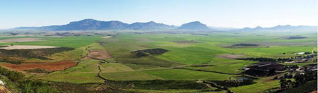 Piketberg Green Wheat Fields, Swartland