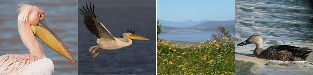Redlinghuys West Coast Birding
