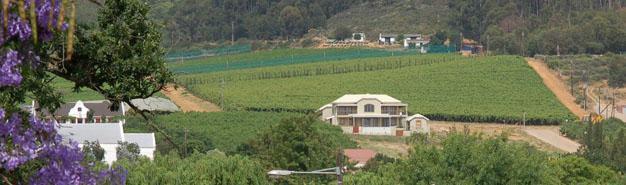 Riebeek Kasteel, Swartland, Western Cape
