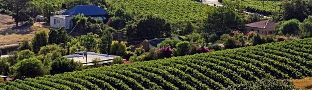 Riebeek West Vineyards, Swartland, Western Cape
