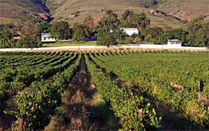 Swartland Vineyards