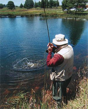 The author playing a good rainbow at a BFFA dam.