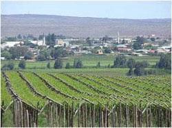 Vredendal Vineyards, West Coast, South Africa