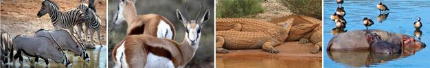 Aquila Private Game Reserve, Touws River, Karoo Wildlife