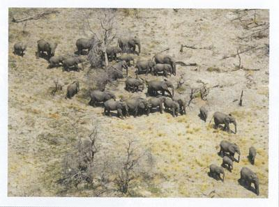 Elephants Without Borders is monitoring the movements and population dynamics of elephants in the KAZA region, the largest range ever studied.