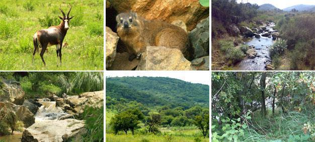 Klipriviersberg Nature Reserve, Johannesburg South