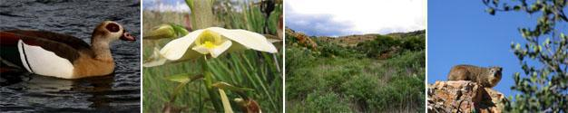 Kloofendal Nature Reserve, Roodepoort, Gauteng