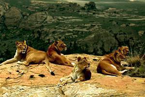 Lion Rock Big Cat Sanctuary, Bethlehem, South Africa