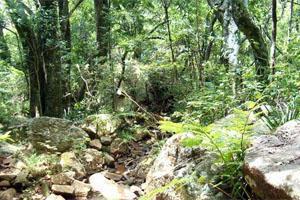 Suikerboschfontein Trail, Carolina, Mpumalanga, South Africa