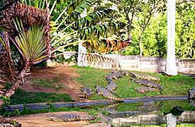Riverbend Crocodile Farm, Southbroom, South Coast, KwaZulu-Natal