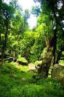 Marutswa Forest Trail and Bird Watching, Natal Midlands