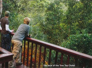 The deck of the Tree Top Chalet