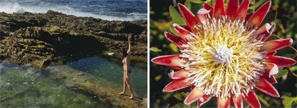 The rock pools and shoreline are filled with littoral life, including fish, sea urchins, anemones, alikreukel, mussels and starfish, so remember to pack goggles and a snorkel; the king protea is one of several thousand plant species to be admired here;