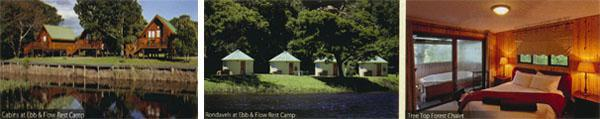 Where to stay - Ebb & Flow Rest Camp, Tree Top Forest Chalet, Diepwalle Campsite